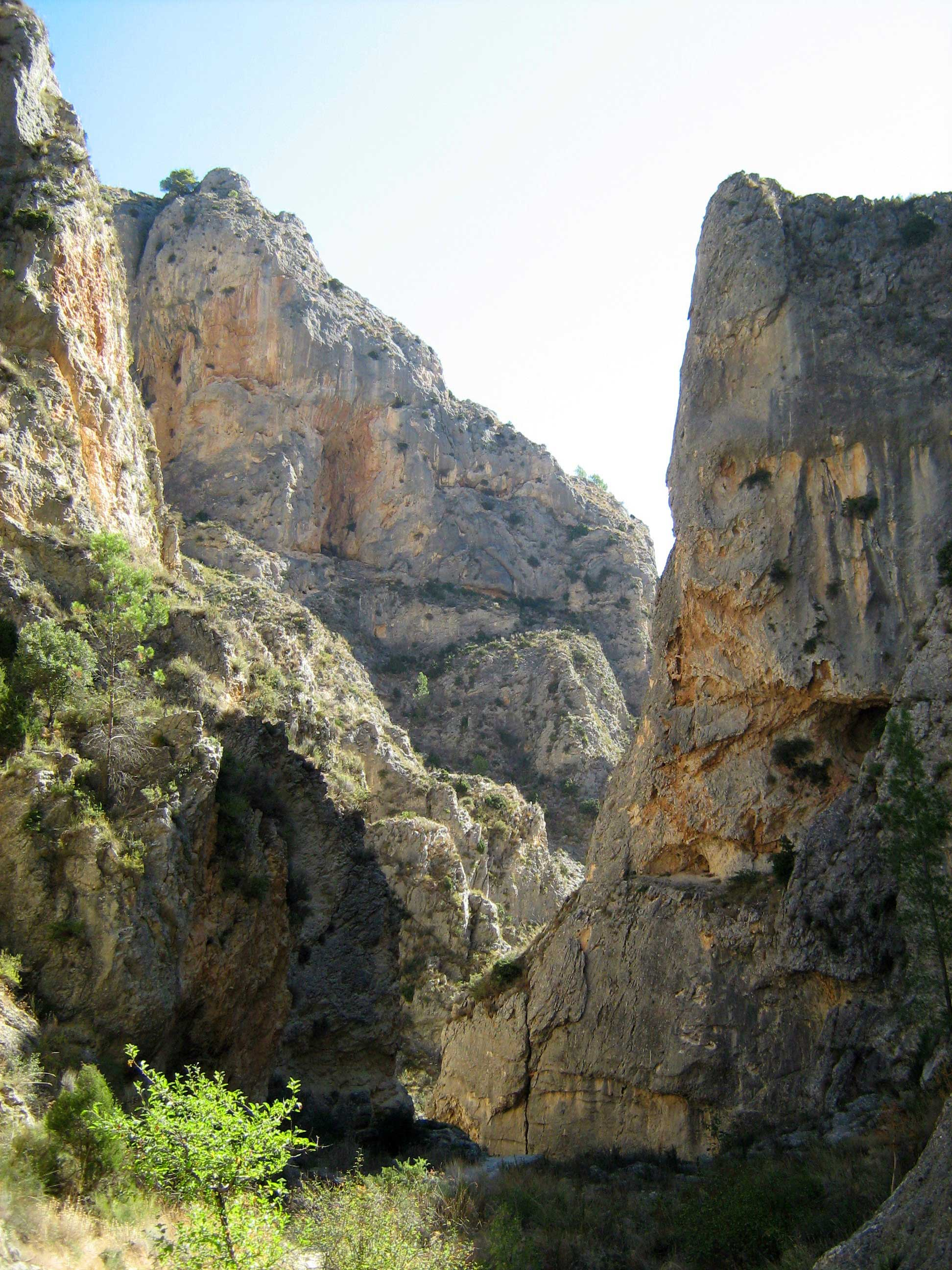The mountainous sierras of the Valencia region provide habitat for some specialist highland bird species