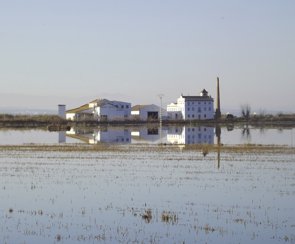 Flooded rice fields at Albufera de Valencia