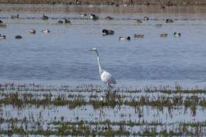 Guided Bird Watching at Albufera de Valencia.