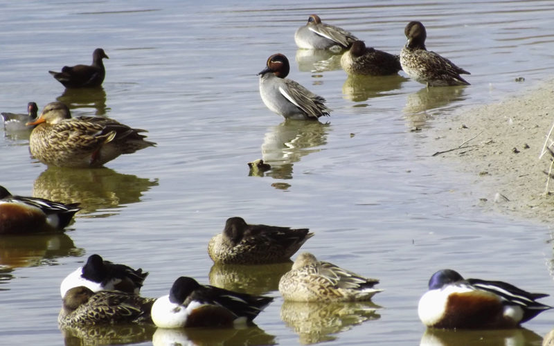 Birding in Valencia