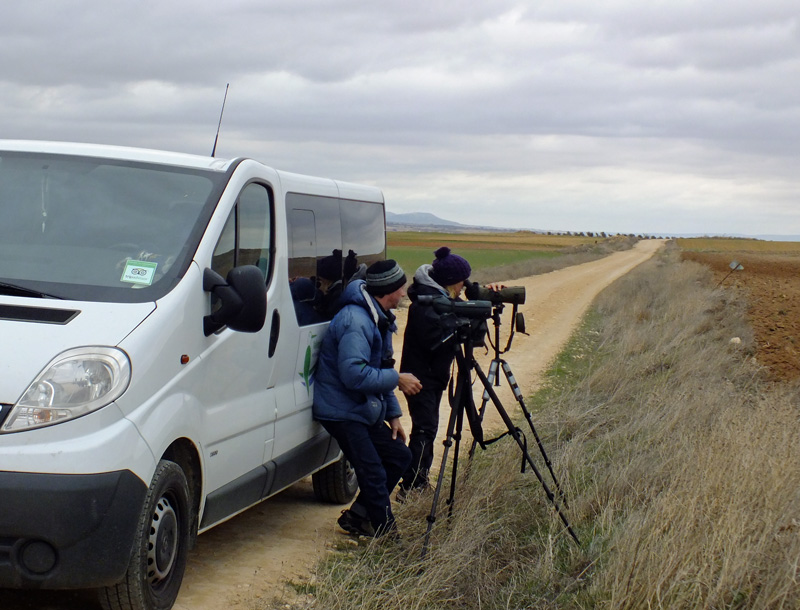 Scanning for Great Bustards and Calandra Larks