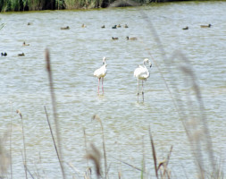 Wildlife and Bird Watching in Valencia