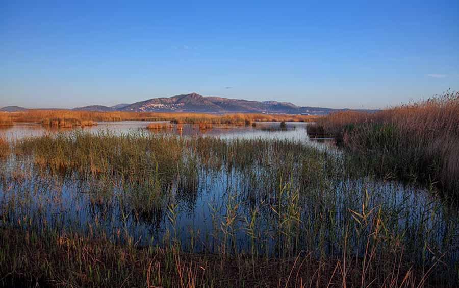 One of Valencia´s many coastal wetland sites