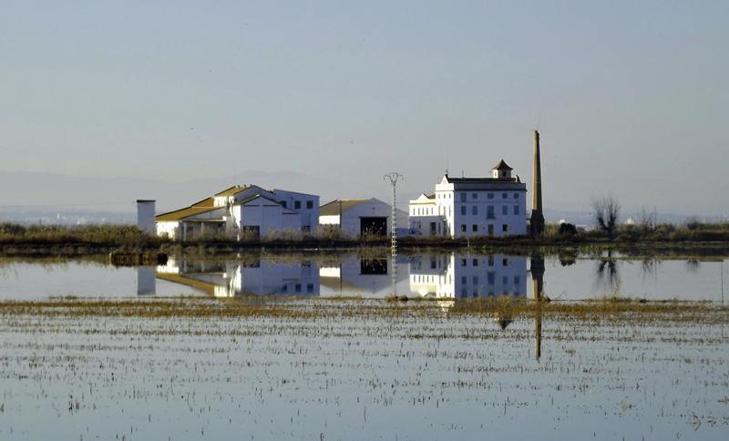 The flooded rice fields of Albufera de Valencia
