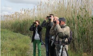 Birding at Albufera de Valencia