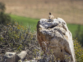 Steppe Birds of Spain
