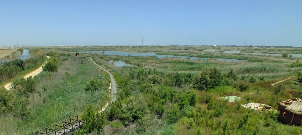 The wetland habitat of Albufera de Valencia