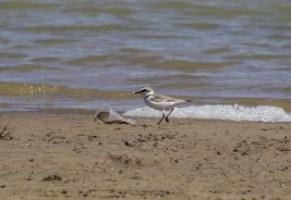 Birding in the reserves of Albufera de Valencia