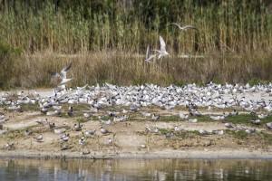 Birding trip to l´Albufera de Valencia