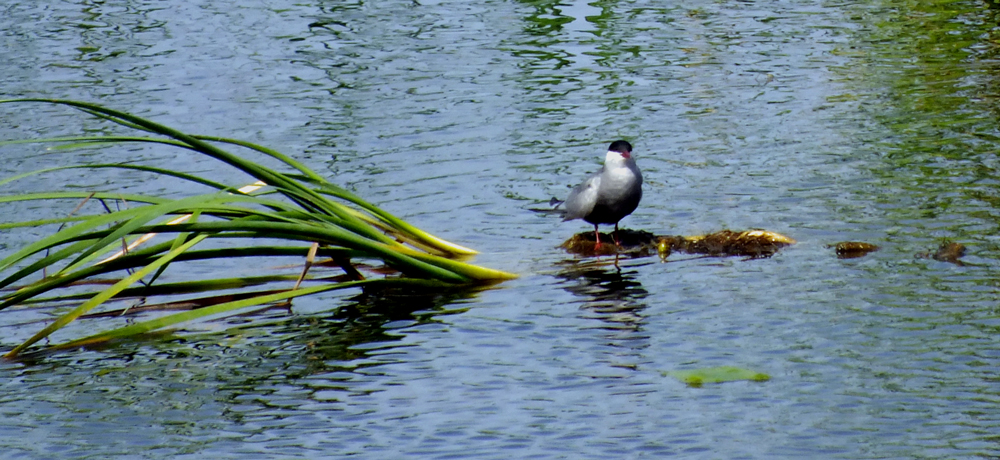 Whk-Tern