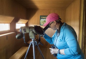 Guided birding in Valencia