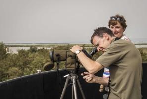 Guided birding trip to Valencian Wetlands