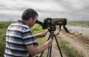 Bird watching trip to Valencian Wetlands