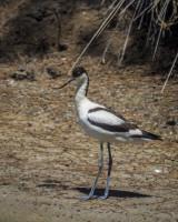 Birding trip to Albufera de Valencia