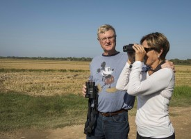 Guided bird watching in Spain