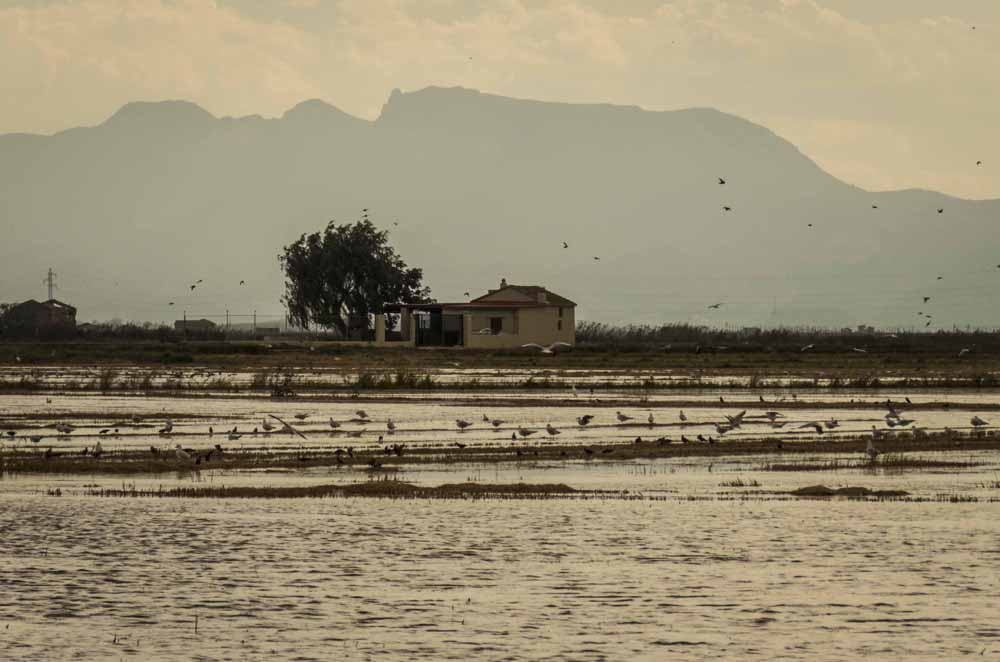 The flooded rice fields of Albufera provide rich feeding areas for countless birds