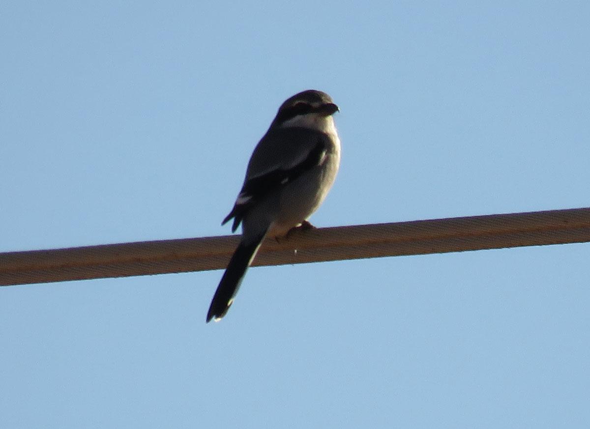 2 day birding trip in Valencia