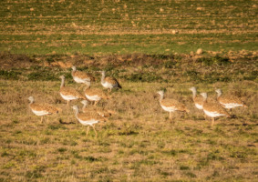 Bird watching on the steppe of Spain