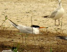 Birding the Wetlands of Valencia