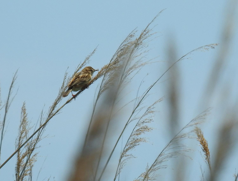 Bird watching in Spain