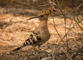 Birding trip to Albufera de Valencia for returning clients