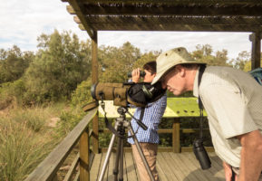 Guided Birdwatching Trip to Albufera de Valencia