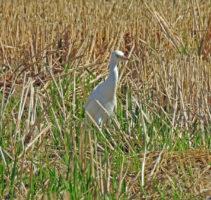 5-Day Birding Holiday