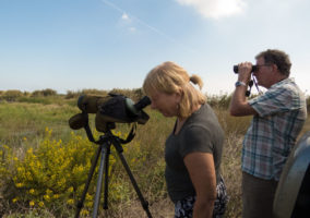 Bespoke Birding Trip to Albufera de Valencia
