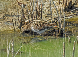 Birding and a Cultural Break in Valencia