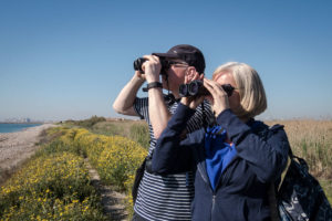 Birding the Coastal Wetlands in Spring