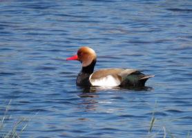 Bird watching in Valencia in the breeding season