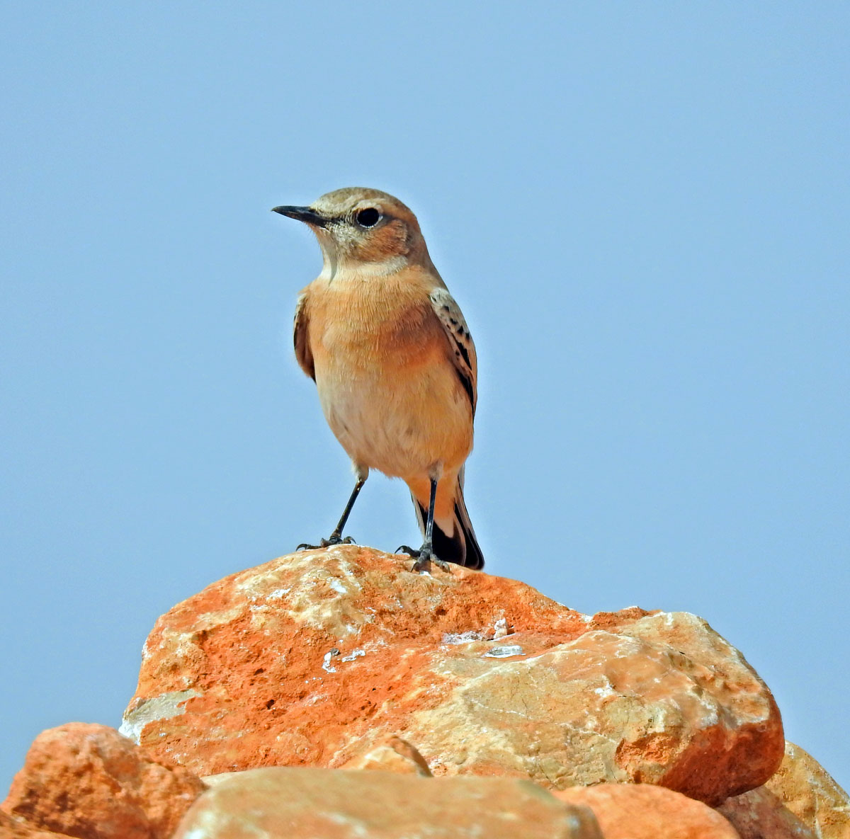 Birding holidays Spain