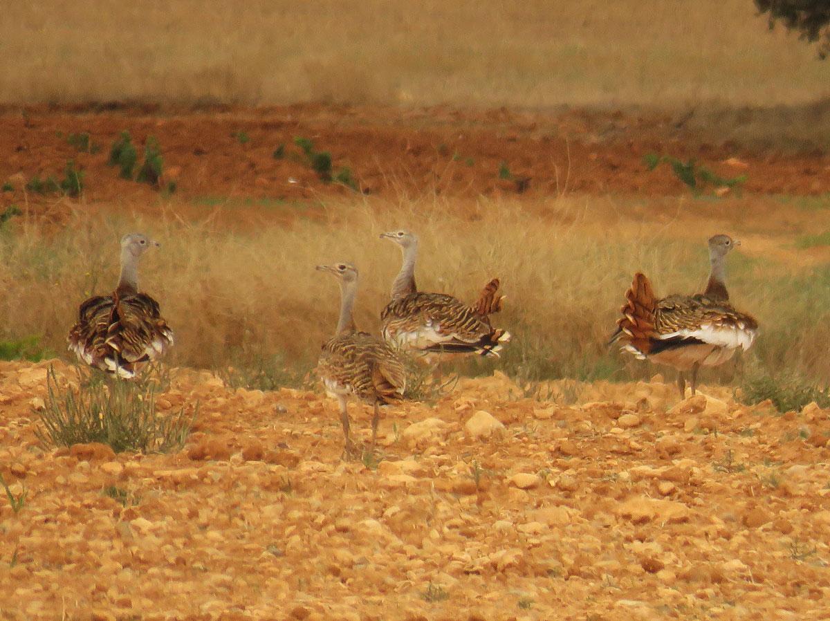 Valencia Birding