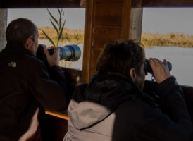 Birding in Albufera Natural Park