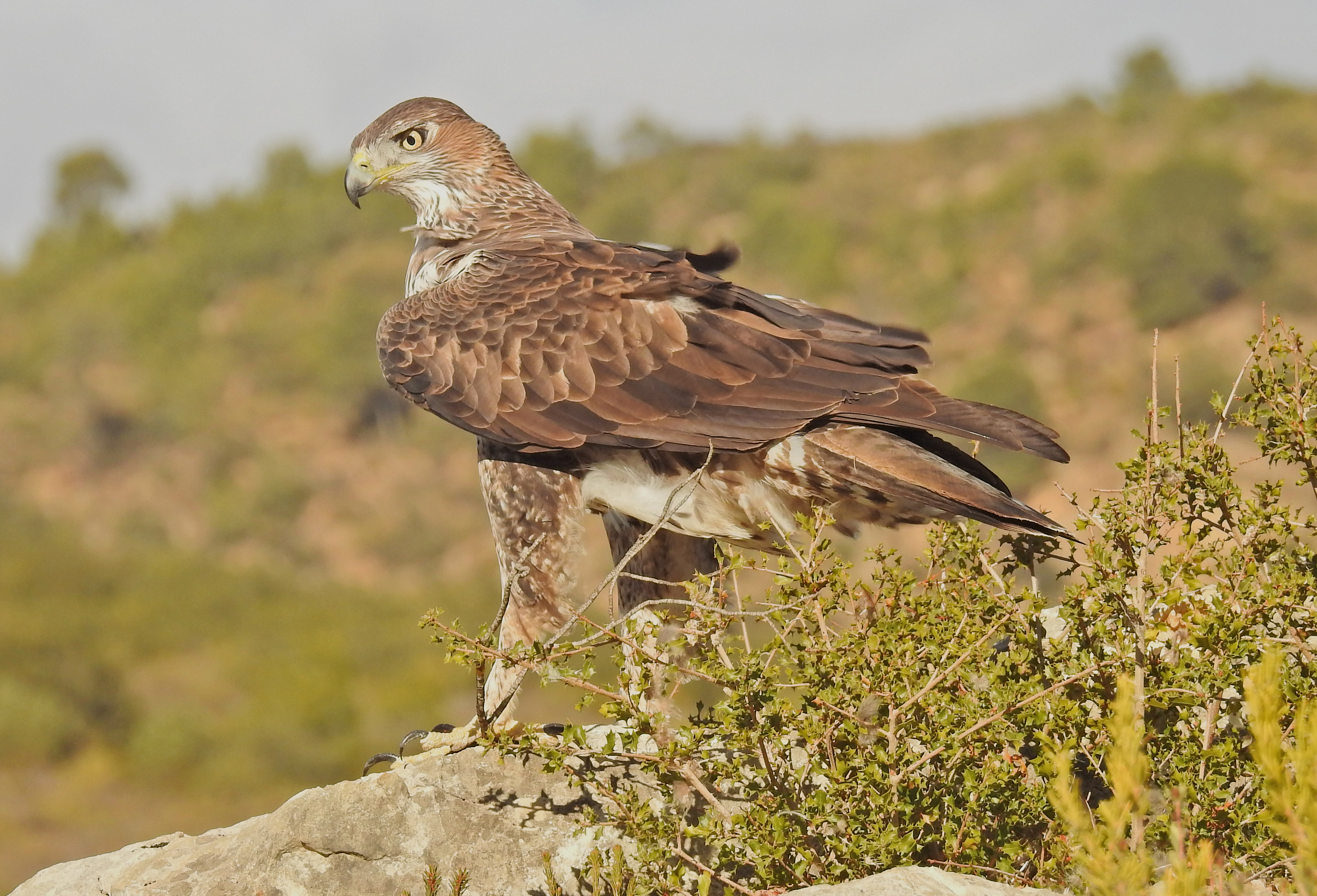 7 Day Bird Photography Trip. - Valencia Birding - Guided Bird ...