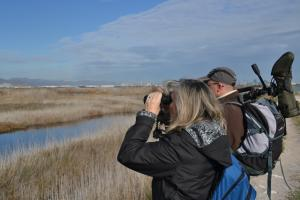 A Christmas Present of a Birding trip to the Valencian Coastal Wetlands.