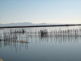 A morning at Albufera de Valencia.