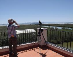 Guided Birding at Albufera de Valencia