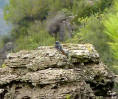 Diary of Bird Life in the La Drova Valley