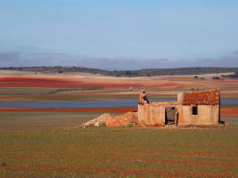 Birding on the Steppe of Eastern Spain