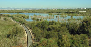 The wetland reserves of Albufera de Valencia