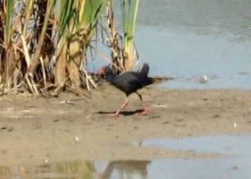 Valencian Coastal Wetlands - 8th September 2011