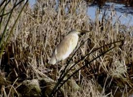 A brief birding trip to our local marsh.