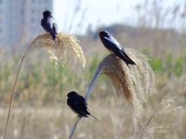 Bird Watching in Valencia