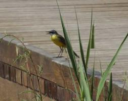 Guided Bird Watching in Valencia
